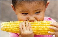 jerusalem corn!