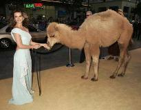 Not Joe Camel
